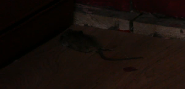 Dode muis in de roze kamer