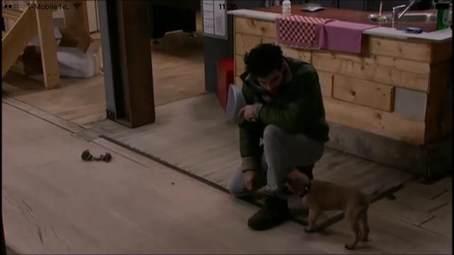 Heeft Ivan puppy Arthur geschopt?