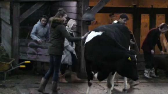 Romy laat haar mede bewoners zien wat er komt kijken bij de verzorging van de koeien